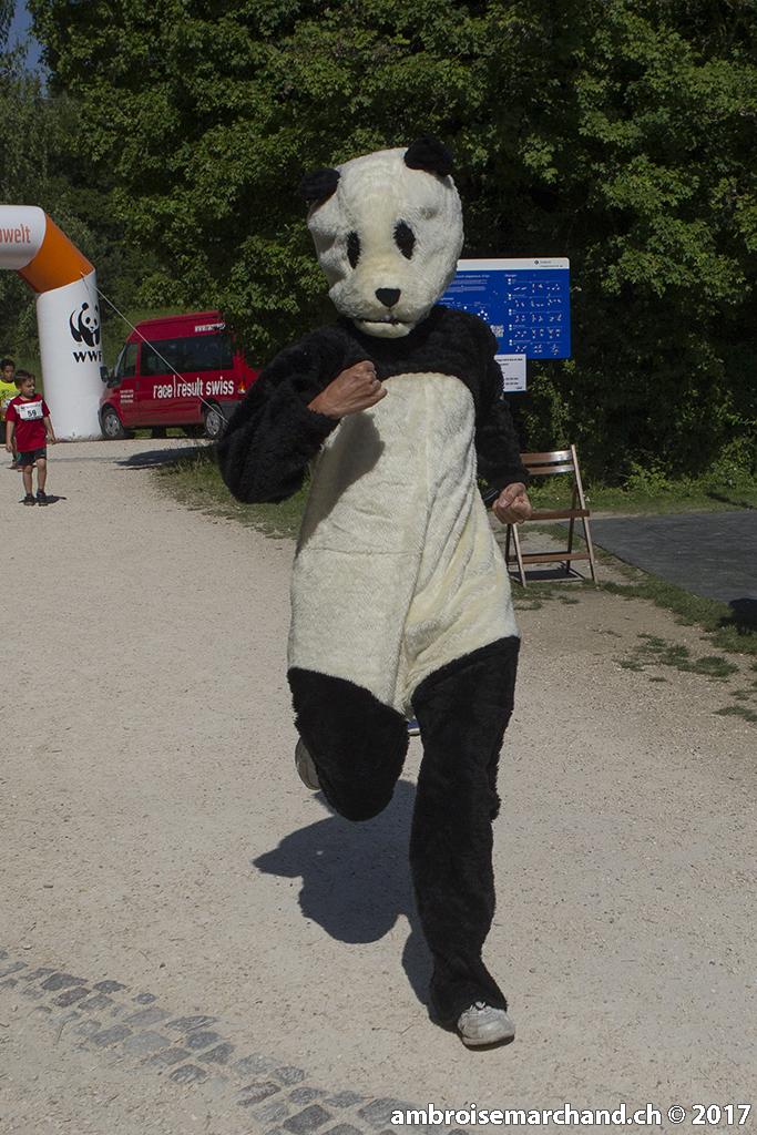 Panda from WWF